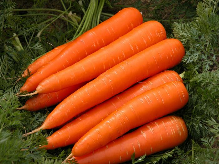 """Cà rốt là """"nữ hoàng của các loài rau"""""""